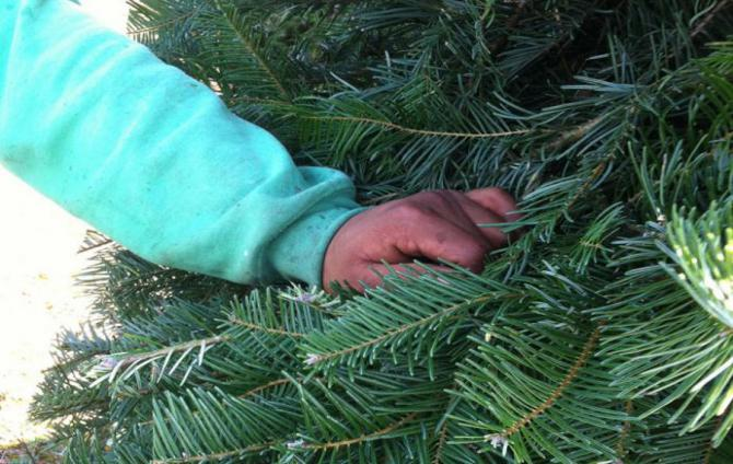 a hand on a christmas tree
